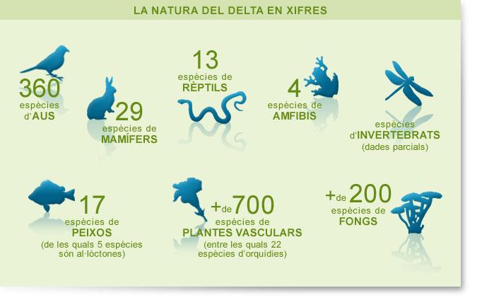 Delta Del Llobregat Mapa Consorci Delta Del Llobregat